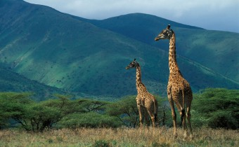 Ngorongoro_Conservation_Area_024-340x210
